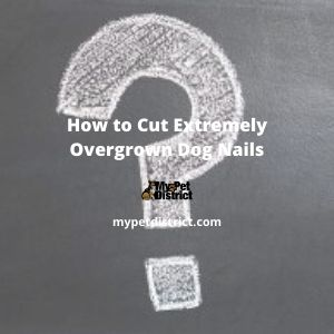 how to cut extremely overgrown dog nails